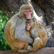 Two monkeys in Kathmandu, Nepal - Stock Photo