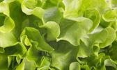 Salad backdrop — Stock Photo