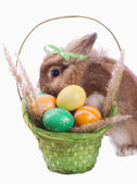 Fance rabbit and easter basket — Stock Photo