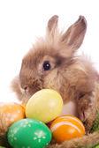 Fantasia coniglio e le uova di pasqua — Foto Stock