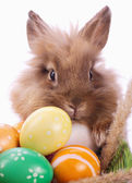 Bunny and eggs — Stock Photo