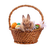 Rabbit and Easter eggs in basket — Stock Photo