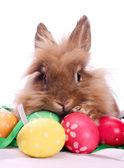 Easter rabbit and eggs — Foto de Stock
