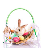 Bunny in easter basket — Stock Photo