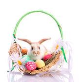 Roztomilý zajíček v velikonoční koš — Stock fotografie
