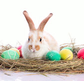 Easter bunny in velour grasses — Stock Photo