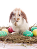 Cute rabbit and easter eggs — Stock Photo