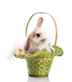 Cute rabbit in the basket — ストック写真