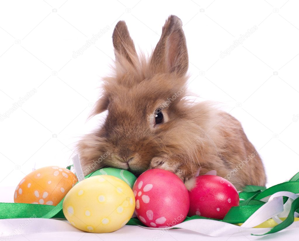 Cute little rabbit and Easter eggs among festive ribbons — Stock Photo #10881386
