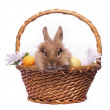 Easter bunny in the basket — Stock Photo #12155186