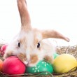Tired easter bunny — Stock Photo #12155228