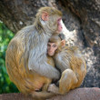 Two monkeys — Stock fotografie