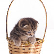 Little kitten in the basket — Stock Photo