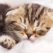 Cute little kitten is sleeping — Stock Photo