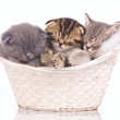 Sleeping kittens — Stock Photo