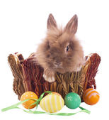 Cute easter bunny — Stock Photo