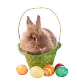 Fluffy rabbit in basket with easter eggs — Stock Photo