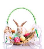 Bunny in basket — Stock Photo