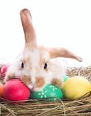 Tired easter bunny — Stock Photo