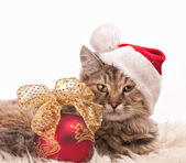 Christmas cat — Stock Photo