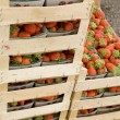 Strawberries ready for sale - Stock Photo