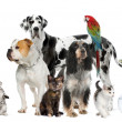 Group of pets standing in front of white and brown background — Stock Photo