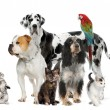 Group of pets standing in front of white and brown background — Stock Photo #10862239