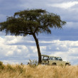 Masai mara - Stock Photo