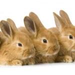 Group of bunnies — Stock Photo