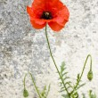 Poppy — Stock Photo #10865846