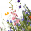 Wild flowers — Stock Photo #10866751