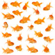 Group of goldfishes - Stock Photo