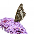 Butterly on flower — Stockfoto