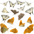 16 butterflies — Stock Photo