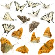 16 butterflies - Stock Photo