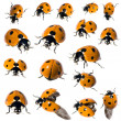 7 spot ladybird in different positions — Stock Photo