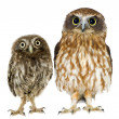 Female owl and a owlet - Stock Photo