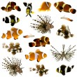 Collection of 17 tropical fish — Stock Photo #10868925