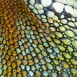 Reptile skin — Stock Photo