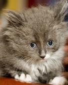 Pussy cat — 图库照片