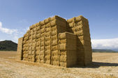 Hay bundles — Stock Photo