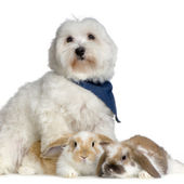 Dog and lop rabbits — Stock Photo