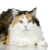 Cat in front of a white background — Stock Photo
