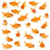 Group of goldfishes — Stock Photo