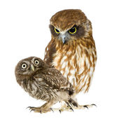 Female owl and a owlet — Stock Photo