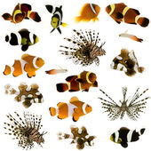 Collection of 17 tropical fish — Stock Photo