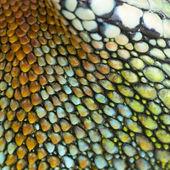 Reptile skin — Stock Photo