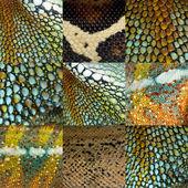 Dokuz renkli sürüngen deri koleksiyonu — Stok fotoğraf
