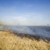 Fire at Masai mara Kenya — Stock Photo