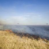 Fire at Masai mara Kenya — Stock Photo